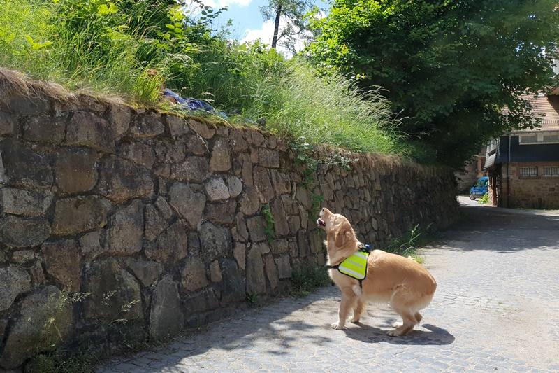 suchhund_gefunden